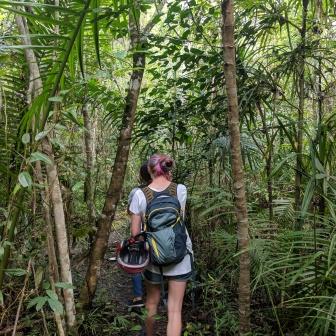Tarsier forest